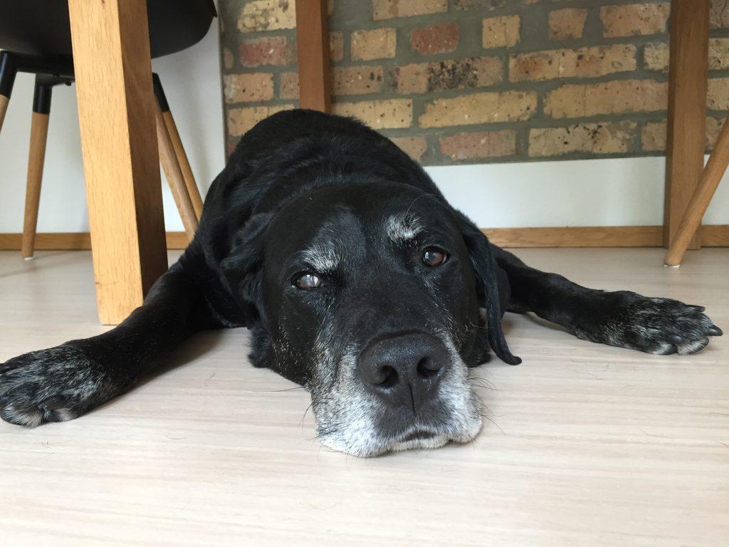 Hund nach Grossbritannien ausreisen