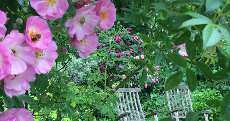 5 Tipps für einen romantischen Cottage Garten