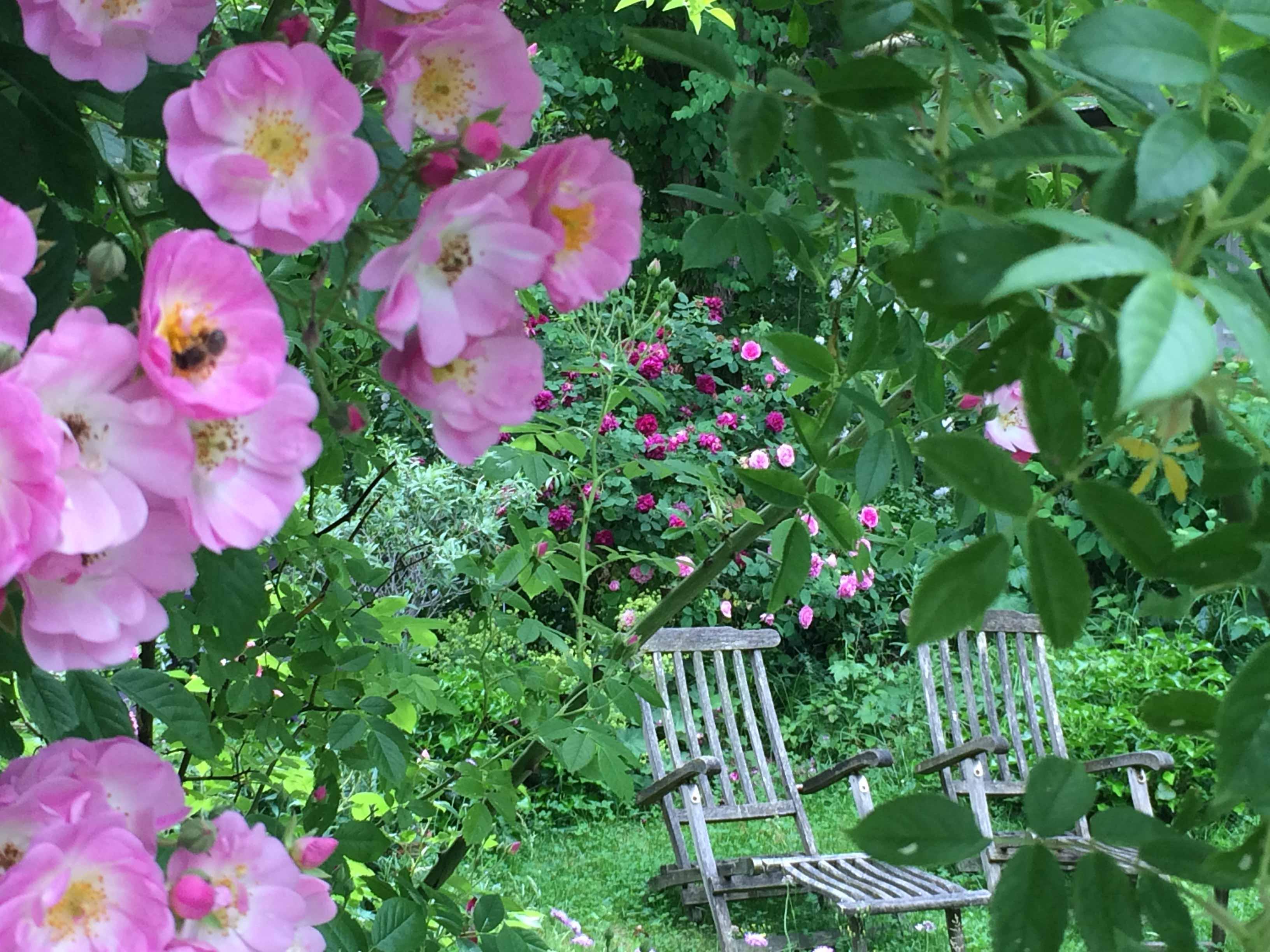 5 Tipps Für Einen Romantischen Garten Im Cottage Stil