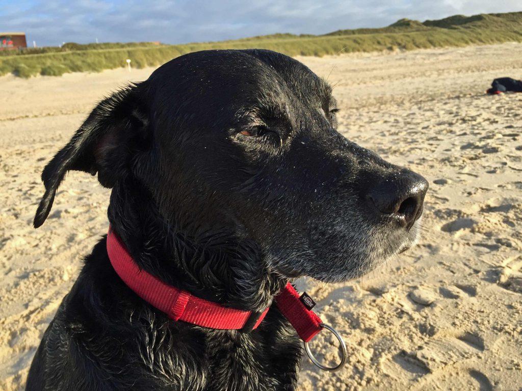 Mit dem Hund nach England reisen