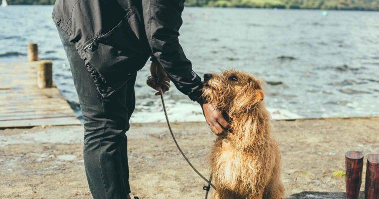 Mit dem Hund in Großbritannien: Was muss ich beachten?